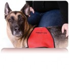 Service Animals: Legal Obligations for Providing ADA Accommodations for Employees, Clients, and Third Parties